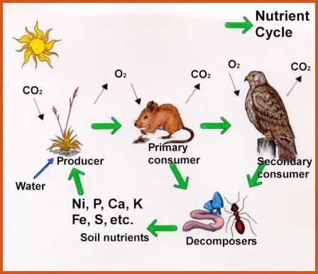 nutrient cycle 1 nutrient cycle in tropical rainforest - powerpoint back to main resource page gcse aqa a living world students start with a basic template of.