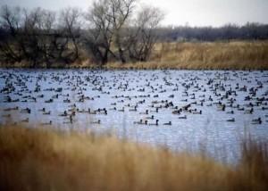 4.11 Dam with ducks