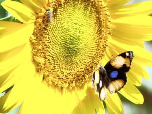 butterfly hope