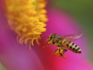 diesel pollination