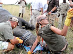 toxic coctail save rhino