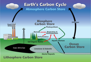 carbon cycle 6