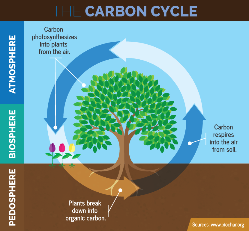 Lesson 6 cycles and energy flow biotic and abiotic interaction carbon cycle 6a ccuart Images