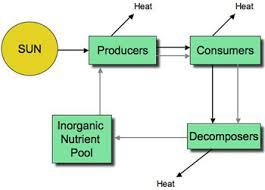 energy ecosystem 2
