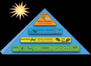 energy loss ecosystem 1
